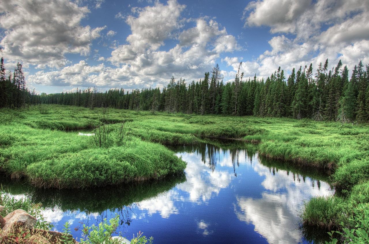 Paysages de marais et de pland'eau.